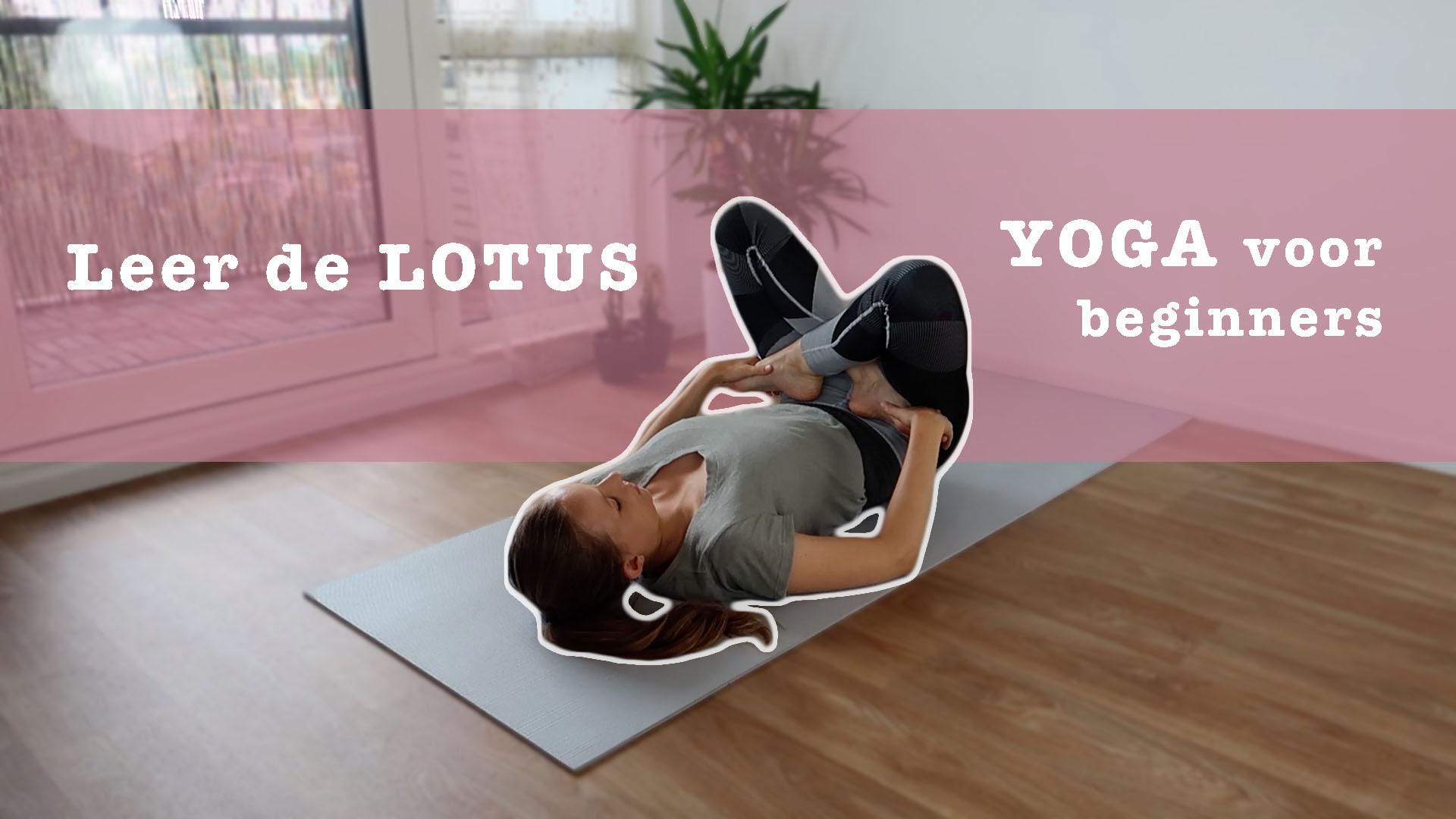 yogales lotus voor beginners