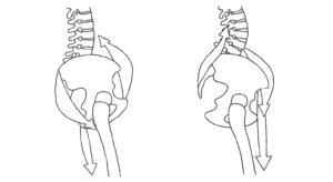 yoga anatomie onderrug